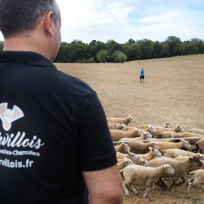 Le Marvillois -13.jpg